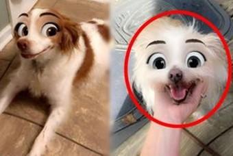 우리집 댕댕이도 가능? 평범한 강아지를 디즈니 캐릭터로 만들어주는 필터 화제