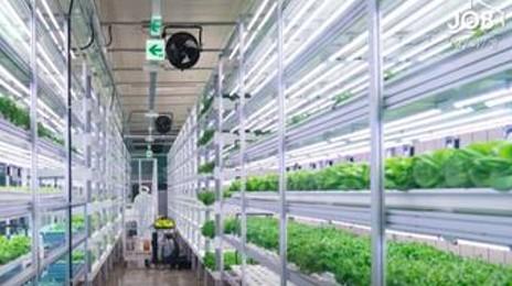 지하철역에서 채소를 재배한다