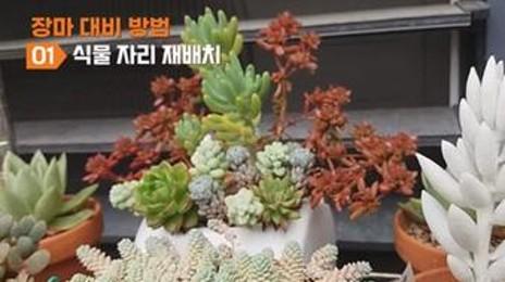 여름 장마철 대비 식물 관리법 8가지
