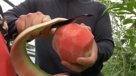 애플수박으로 우뚝선 청년농부