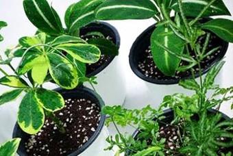너무 커버린 식물들, 단체 분갈이