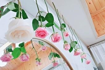 집에서 예쁘게 장미꽃 말리기