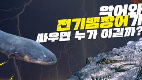 #26 전기뱀장어에게 배우는 전력생산 기술 ⚡️ 전파과학사 재미있는 과학이야기