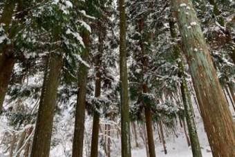 관광객 연 5만명 찾는 편백나무 숲의 비결