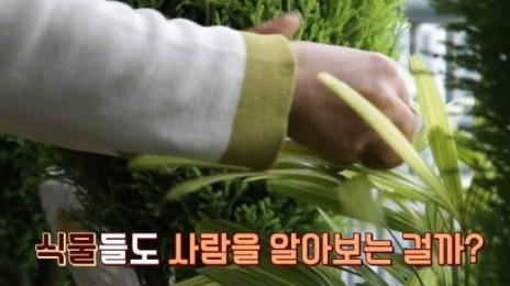 '반려식물'은 내 애정을 알까?
