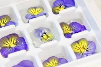 보라색 꽃이 예쁜 비올라로 '꽃얼음' 만들기