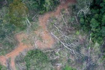 브라질 아마존 숲, 이산화탄소 흡수보다 배출 많았다