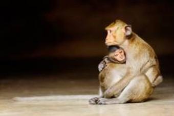 사랑의 발견 – 해리 할로의 원숭이 실험