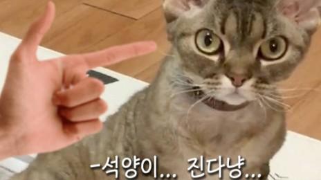 빵야하는 고양이가 있다?!
