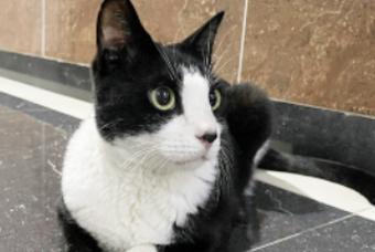 천진난만하고 순수한 고양이 '니체'랍니다~