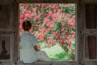 한옥+꽃 조합은 사랑이죠~ 배롱나무 꽃 만개한 대구 핫플