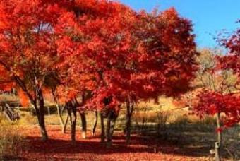 빨갛게 노랗게 물든 춘천, 태백 가을여행지 4