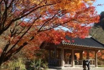 가을엔 단풍이지! 전국 단풍 명소 BEST 8