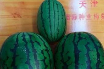 비싸도 '작은 수박' 사는 중국인, 왜?