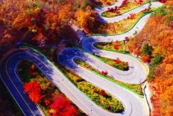 운전고수만 가능! '단풍 명소' 국내 도로의 실제 모습
