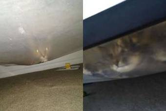 침대 밑 괴물이? 깜짝 등장한 동물의 정체