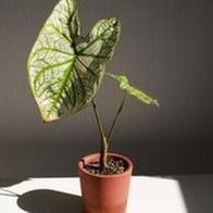여름철 식물 관리 비법