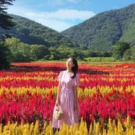 '한국 맞아?' 현재 SNS에서 난리난 꽃구경 가능한 장소